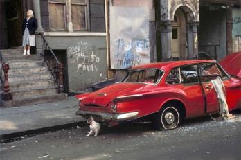 "Helen Levitt, ""Cat next to Red Car, 1973 THIS ISN'T ART????"