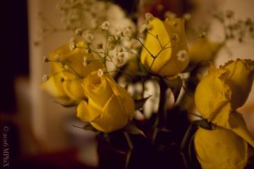 Macro Roses_MPHIX