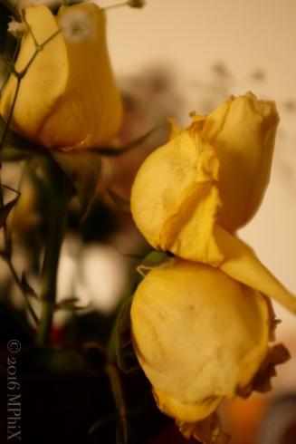 Valentines Roses_MPHIX